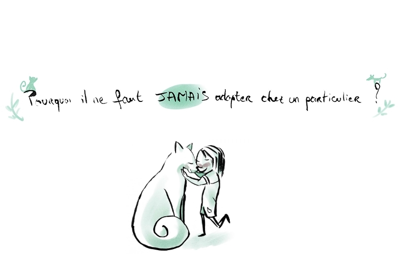 Pourquoi il ne faut jamais adopter un chat chez un particulier ?