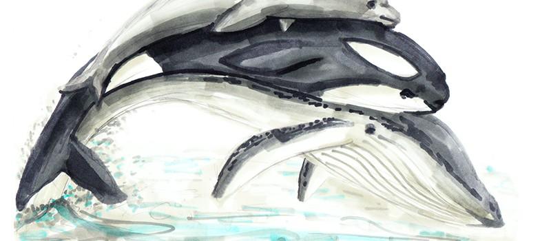 Tilikum est mort : comment aider les orques ?