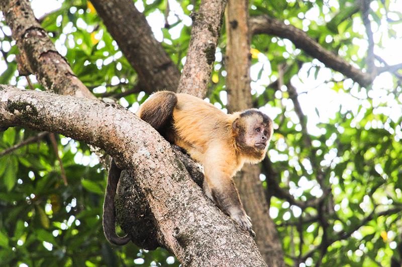 Voir des animaux au Brésil : excursion sur le delta das Américas