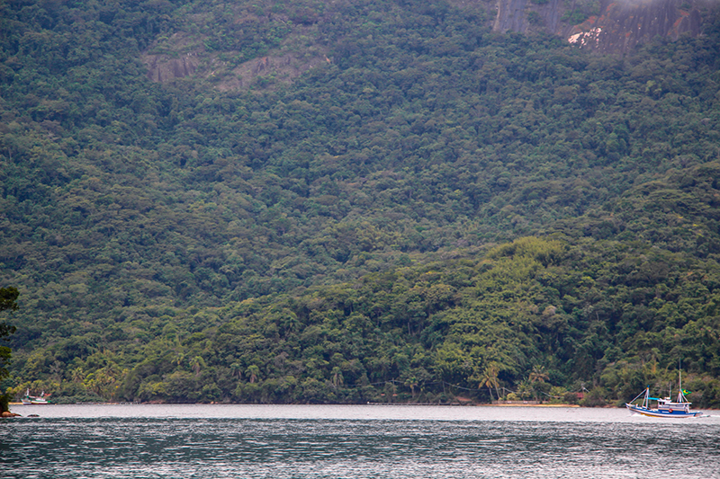 ilha grande randonnée forêt