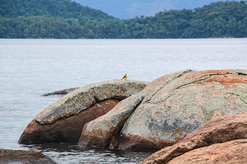 ilha grande oiseau caillou