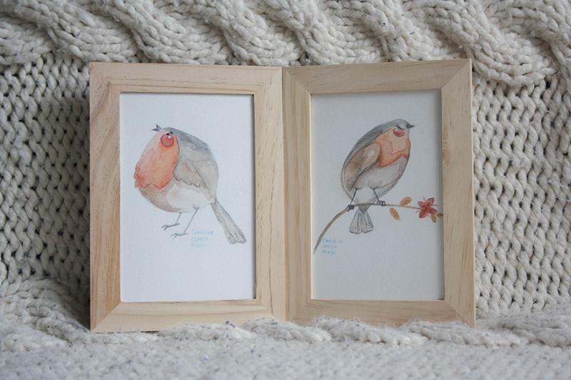 courcours oiseaux illustrés rouge-gorge